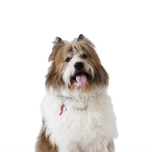 Hund Vito